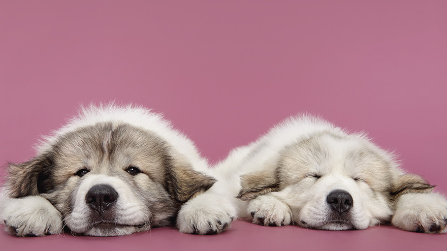 Whats-cuter-than-photographs-of-just-one-dog-Photographs-of-two-dogs13__880
