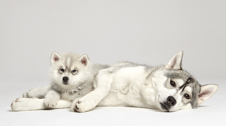 Whats-cuter-than-photographs-of-just-one-dog-Photographs-of-two-dogs16__880