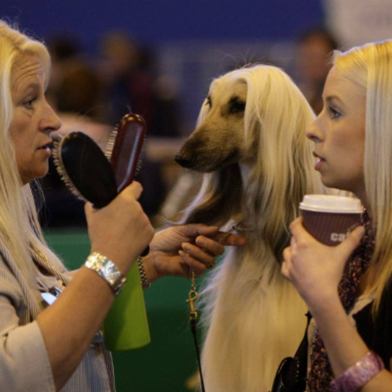 dog_show_hair-original-808x808