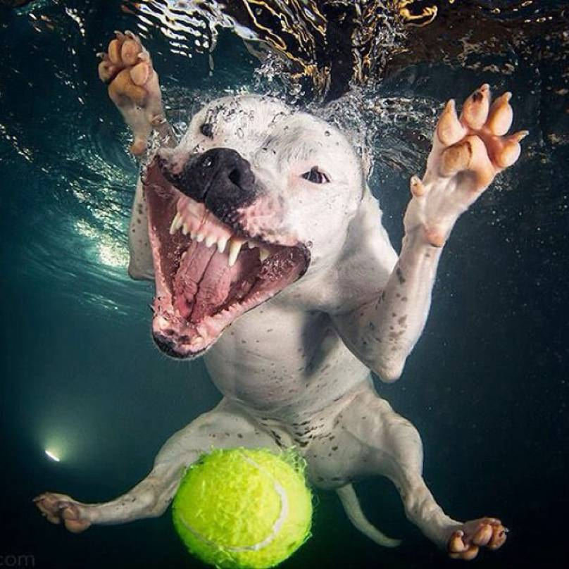 dog_underwateroriginal-808x808