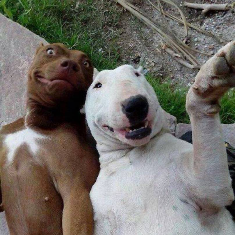 expressive_dogs-808x808