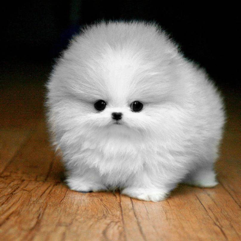 fluffball_original-808x808
