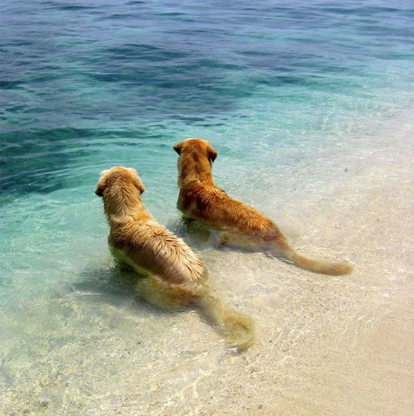 Best-Friends-At-The-Beach