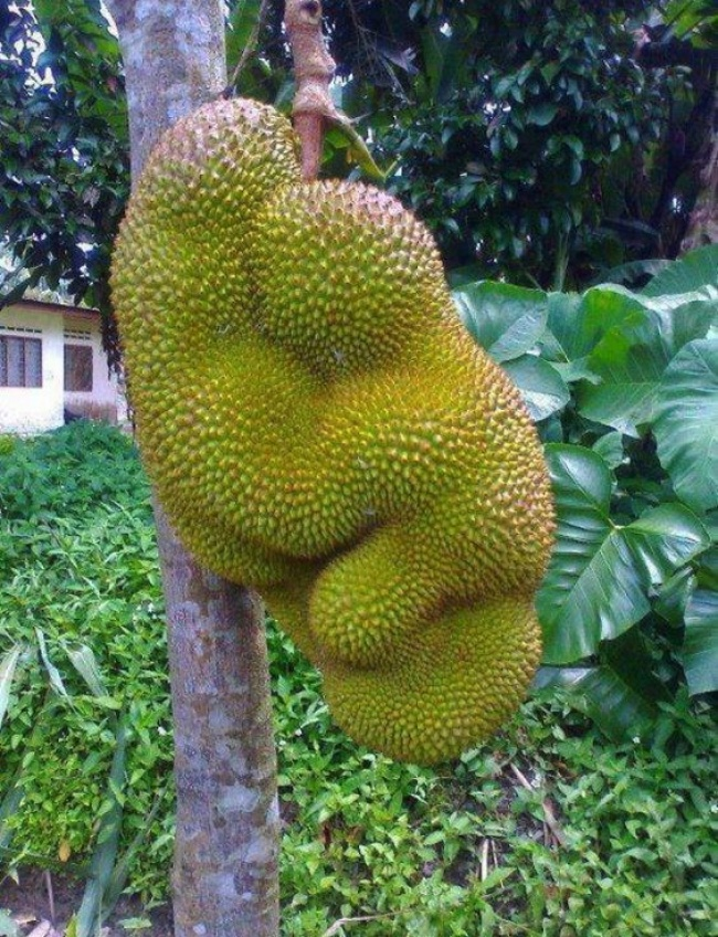 20-funny-fruits-and-vegetables-looking-exactly-like-something-else-08